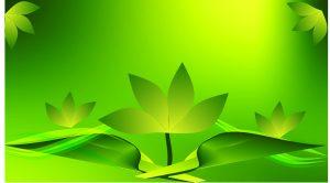 flexboard hd green leaf background